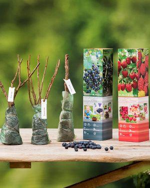 Set van 4 fruitplanten